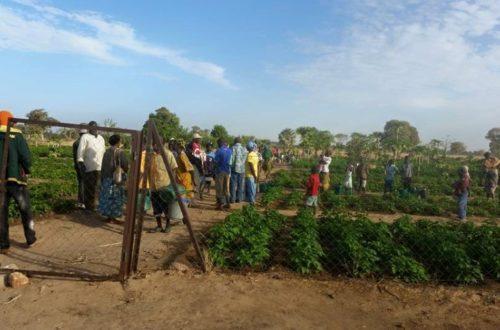 Article : Ces amazones de l'agriculture